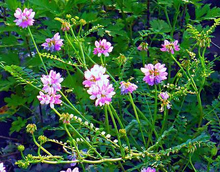 Wildflowers by Michael Degenhardt