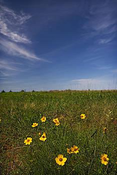 Ricky Barnard - Wildflowers
