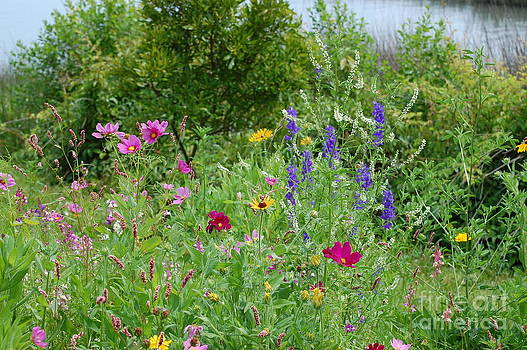 Wildflowers by Tina Shamay