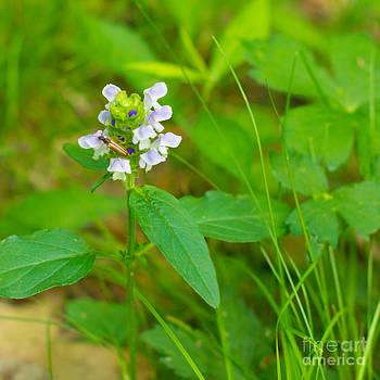 Christina Klausen - Wildflowers VIII