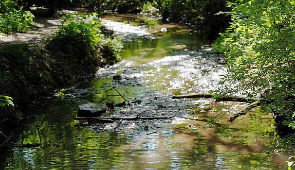 Wildwood Creek by Leslie Ann Hammer