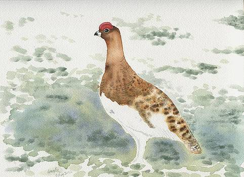 Willow ptarmigan male by Wenfei Tong