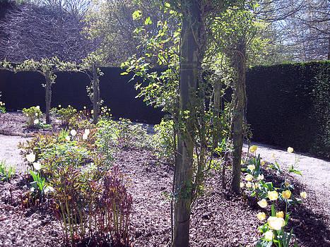 Rachael Shaw - Wilson Mill Gardens 12