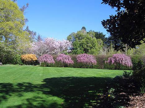 Rachael Shaw - Wilson Mill Gardens 17