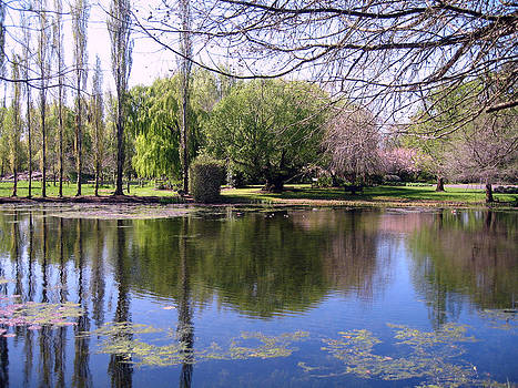Rachael Shaw - Wilson Mill Gardens 4