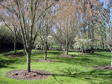 Rachael Shaw - Wilson Mill Gardens 6