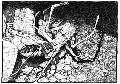 Wind Scorpion by A Leon Miler
