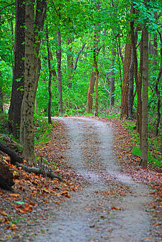 Winding Path 3 by Peter  McIntosh