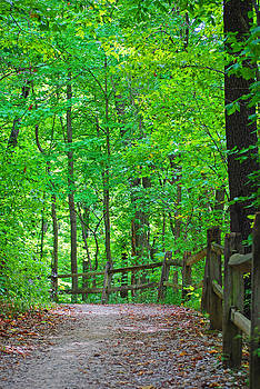 Winding Path 4 by Peter  McIntosh