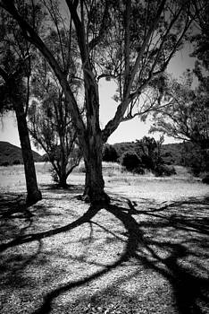 Winding Shadows by Heidi Reyher