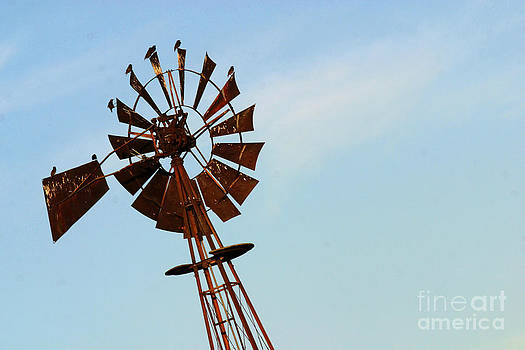 Gary Gingrich Galleries - Windmill-3667
