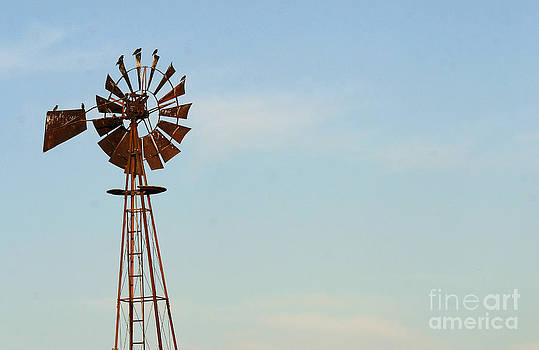Gary Gingrich Galleries - Windmill-3673