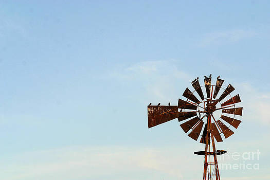 Gary Gingrich Galleries - Windmill-3768