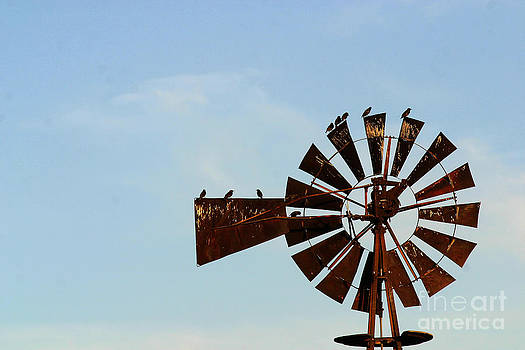 Gary Gingrich Galleries - Windmill-3772