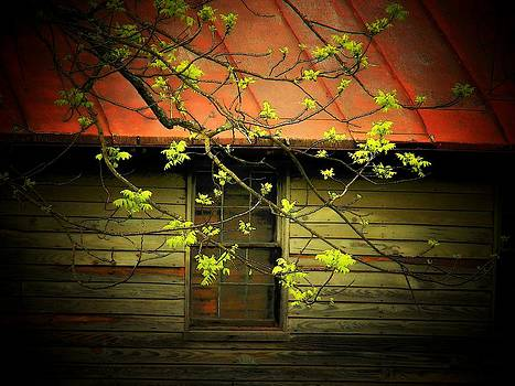 Window and Branch by Joyce Kimble Smith