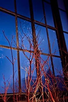 Window at Longwood Gardens by Heidi Reyher