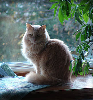 Window Cat by Nick Solovey