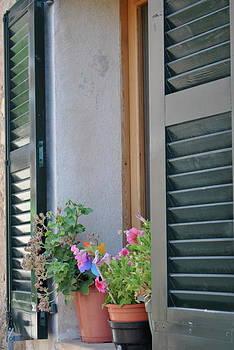 Window Palma By Blair Maynard