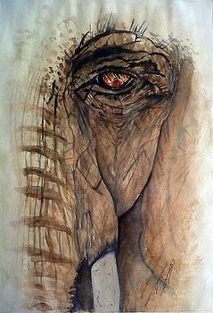 Windows I Elephant by Paula Steffensen