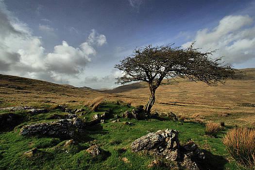 Windswept by Peter Skelton