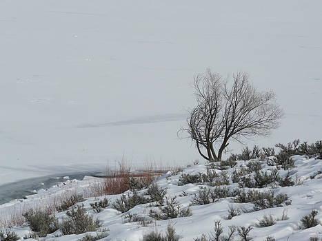 Angela Hansen - Windswept Tree
