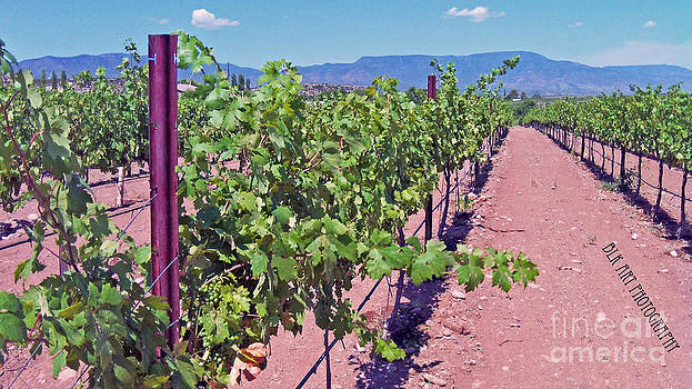 Wine on the Vine by Benny Kennedy