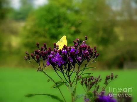 Winged Beauty by Elizabeth Hernandez