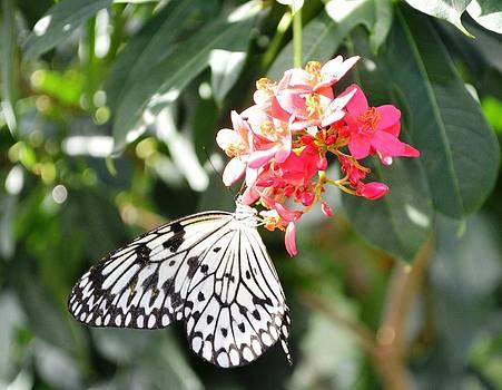 Winged glory by Salomi Prakash