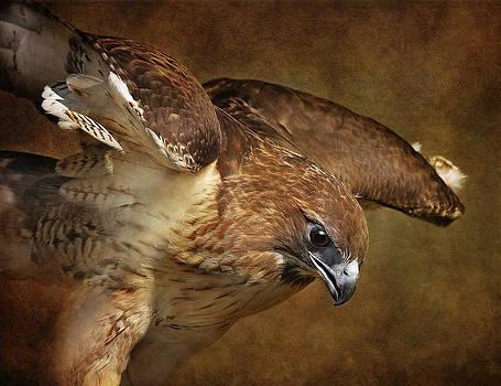 Winging It by Pat Abbott