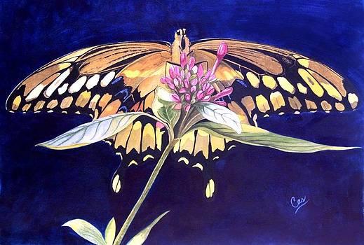Wings by Karen Casciani