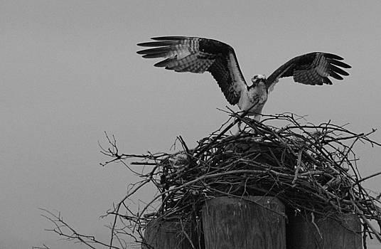 Wings Spread by Bob Lennox