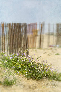 Susan Gary - Winter Beach Scene
