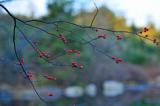 Winter Berries by Peter  McIntosh
