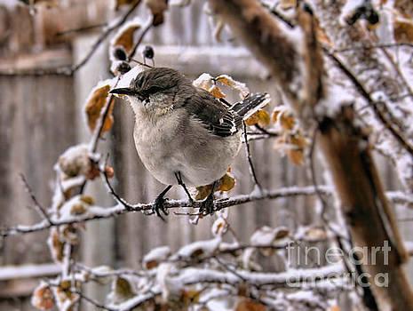 Winter Bird by Kelly Christiansen