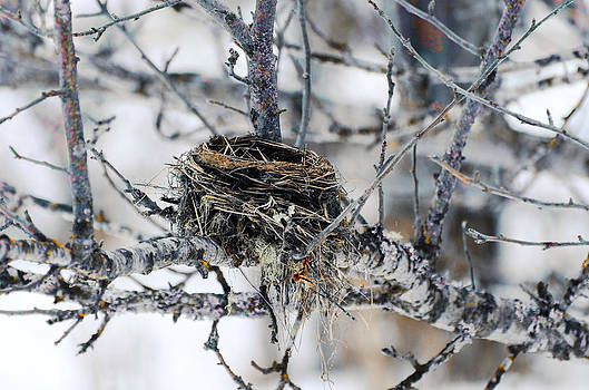 Winter Bird Nest - Color Highlighted Photograph by Light Shaft Images