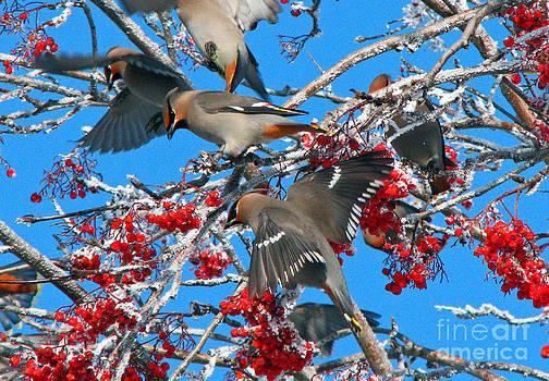 Winter Birds by Sandra Longstreet