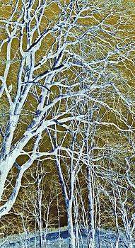 Winter Blues by Susan Leggett