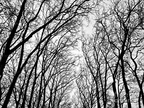 Nabucodonosor Perez - Winter Branches - I