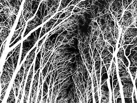 Nabucodonosor Perez - Winter Branches - II