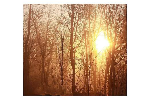 Winter dawn by Peggy Quade