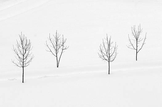 Zoran Buletic - Winter Field II