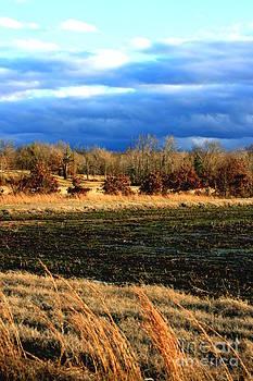 Winter Field by Linda Fowler