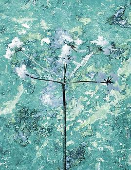 Winter Flower by Ioana Geacar