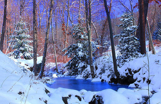 Winter Forest by Cathy Leite Photography