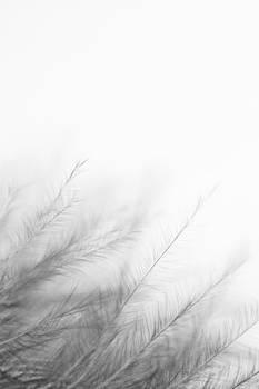 Winter Forest by Daniel Kulinski