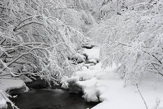 Winter by George Cislariu