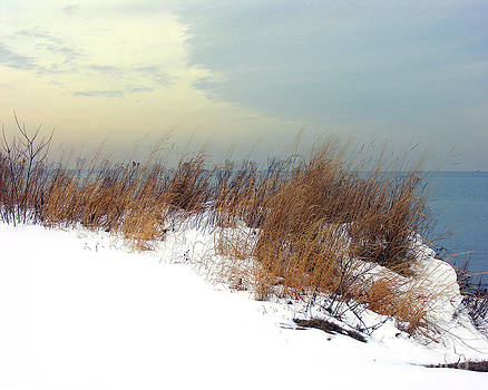 Anne Ferguson - Winter Grasses in Snow