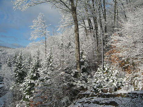 Winter in the Laurentians by Marlene Roy