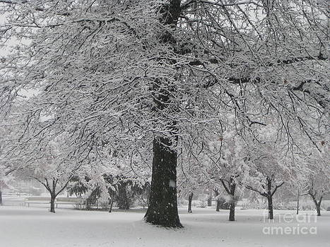 Winter in the park by Donna Renier