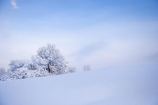 Winter by Ivailo Petrov